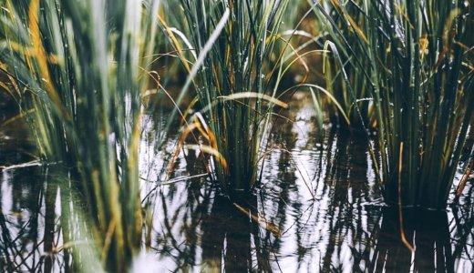 麦ごはん、発芽玄米、雑穀ごはん。この中で栄養価が豊かなのはどれ?