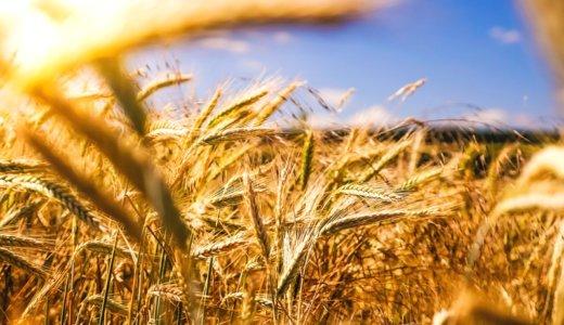 「玄米・雑穀には毒(アブシジン酸)があって体に悪い」は本当!?