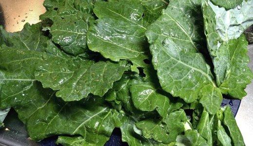 ケールと野菜を徹底比較!美容と健康、両方に役立つ野菜No.1とは